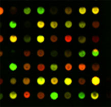 Microarray analysis of gene expression