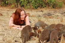 Dr Emma Vitikainen with a clan of banded mongoose.