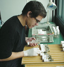 Dr David Hosken in the lab working with dung flies