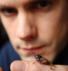Professor Tom Tregenza with a cricket