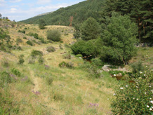 Butterfly habitat in central Spain